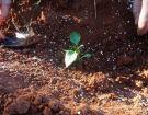Ενσωμάτωση ζεόλιθου σε κτήμα με λαχανικά, Κύπρος