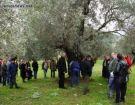 Μυτιλήνη: Μια διαφορετική εκδήλωση με δώρο... ένα κιλό ζεόλιθο!