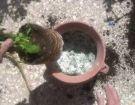 Εφαρμογή φυσικού ζεόλιθου σε άνθη