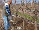 Ν. Λυγερός: Ενσωμάτωση ζεόλιθου σε μηλιές - Καστοριά