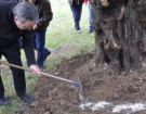 Ενσωμάτωση ζεόλιθου σε ελαιόδενδρα - Μυτιλήνη