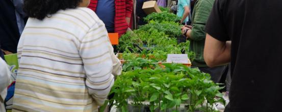 5000 παραδοσιακά φυτά με ενσωματωμένο ζεόλιθο δόθηκαν