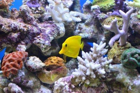 Ζεόλιθος ενυδρεία αμμωνία ψάρια.